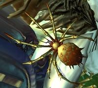Image of Infant Spider