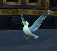 Image of Saltspray Gull