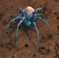 Image of Glassweb Spider