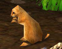 Image of Plump Marmot