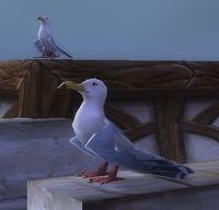 Image of Rustberg Gull