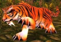 Image of Young Stranglethorn Tiger