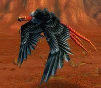 Imagen de Águila ratonera sedienta