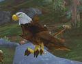 Imperial Eagle.jpg