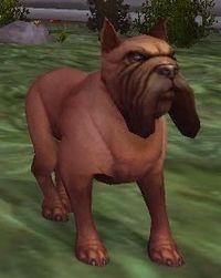 Image of Tracking Hound