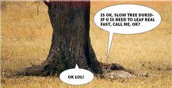 Tree-dont-run.jpg