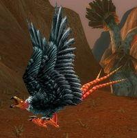 Imagen de Águila ratonera famélica