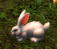 Image of Elfin Rabbit