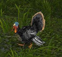 Image of Highlands Turkey