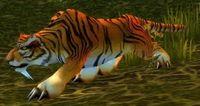 Image of Elder Stranglethorn Tiger