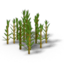Plant sugarcane 3 crop.png