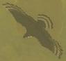 BotW Islander Hawk Model.png