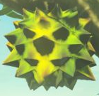 BotW Hearty Durian Model.png