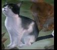 TP Cat Model.png