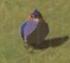 BotW Blue Sparrow Model.png
