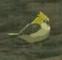BotW Golden Sparrow Model.png