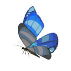 BotW Winterwing Butterfly Icon.png