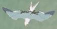 BotW Seagull Model.png