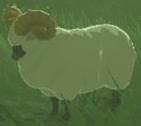 BotW Highland Sheep Model.png