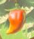 BotW Spicy Pepper Model.png
