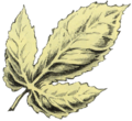LA Golden Leaf Artwork 2.png