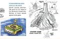 HH TWW Scrapped Islands.png