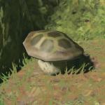 BotW Hyrule Compendium Ironshroom.png