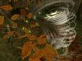 Gale Boomerang Whirlwind.jpg