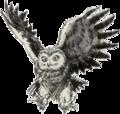 LA Owl Artwork 3.png