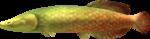 MM3D Ferocious Pirarucu Model.png