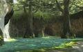 Sacred Grove 3.jpg
