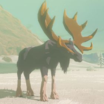 BotW Hyrule Compendium Tabantha Moose.png