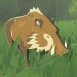 BotW Hyrule Compendium Woodland Boar.png