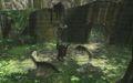 Sacred Grove 4.jpg