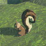 BotW Hyrule Compendium Bushy-Tailed Squirrel.png