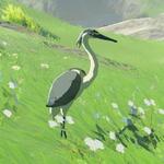 BotW Hyrule Compendium Blue-Winged Heron.png