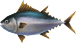 MM3D Nuptuna Model.png