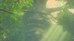 BotW The Great Deku Tree Model.png