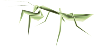 TP Male Mantis Render.png