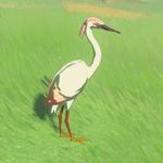 BotW Hyrule Compendium Pink Heron.png