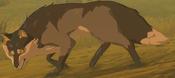 BotW Wasteland Coyote Model.png