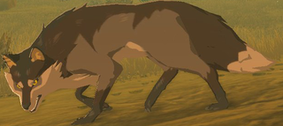 BotW Wasteland Coyote Model.png