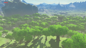 BotW Forest of Spirits.png