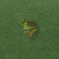 BotW Hyrule Compendium Tireless Frog.png