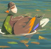 BotW Bright-Chested Duck Model.png